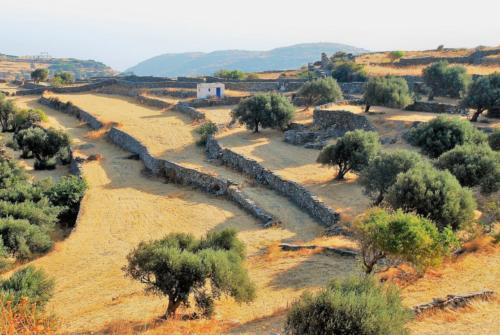 Parcelles de culture bordées d'oliviers sur l'île de Sifnos (Cyclades, Grèce) 2009